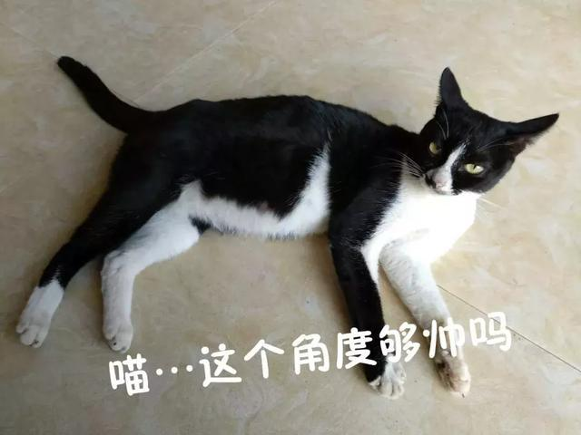 表情猫发神经各种尬帅,朕的奶牛qq字表情包图片狗狗带图片的请收好~图片