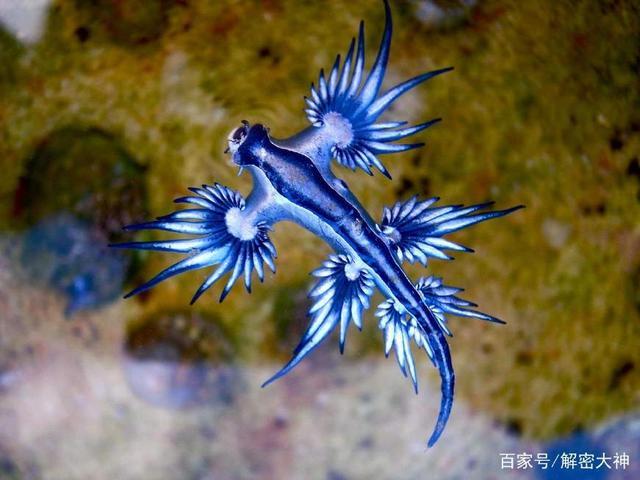 世界上体型最小的5种动物-玩意儿