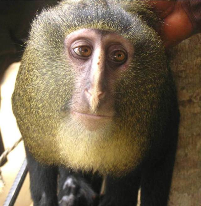 地球上最奇怪的22个稀有动物?-玩意儿