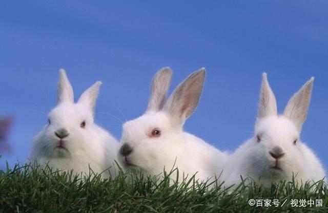 幽默搞笑风趣内涵段子:兔兔被辞职的原因到底