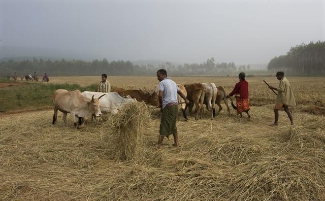 在农村,有钱人的四大标准,你达标了吗?_hao1
