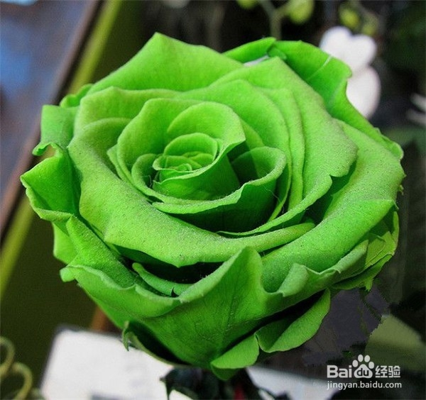 送玫瑰花的含义 送玫瑰花几朵各代表什么