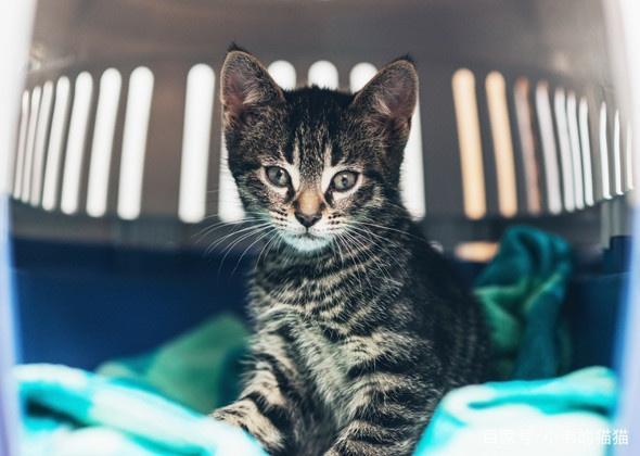 宠物:保持室内猫快乐的9个秘诀