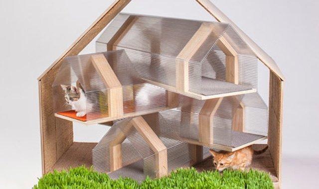 「猫舍在哪里找」猫屋