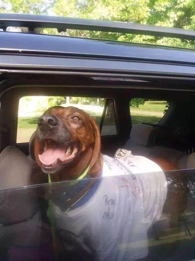 送狗狗回家 狗狗怎么回家