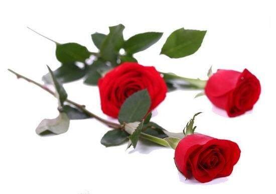 「61朵玫瑰的爱情寓意」送花朵数的含义