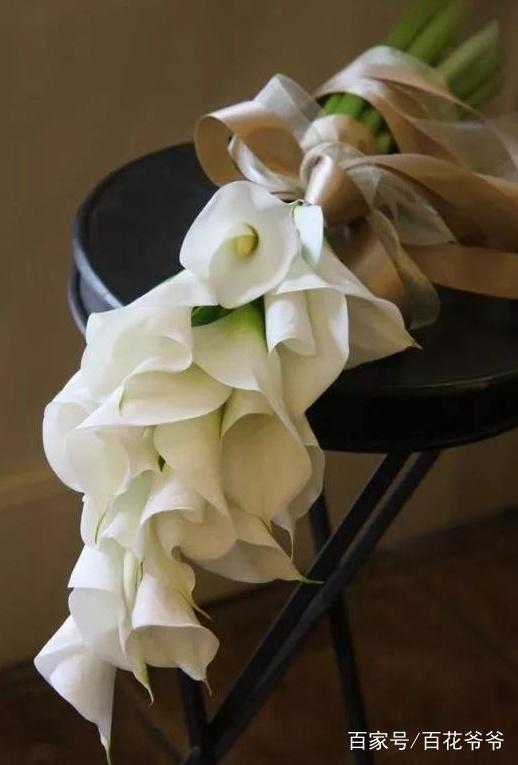 「动态玫瑰花图片高清图片」情人节玫瑰花图片